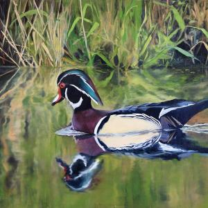 """Wood Duck"", Oil on Panel, 15x30"