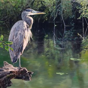 """Studying the Stream (Blue Heron).  Oil on Panel, 35"""" x 20"""""""
